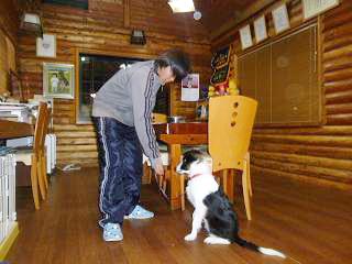市原市犬の訓練所